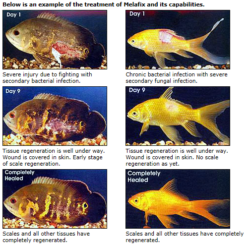 Aquarium Fish Fish Health on oscar cichlid diseases
